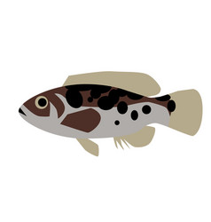 Spotted fish flat style vector