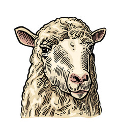 sheep head hand drawn in a graphic style vintage vector image