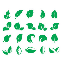 green leaf iconss isolated on a white background vector image vector image