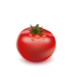 Red big fresh tomato vector image