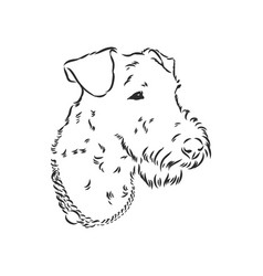 Airedale terrier dog hand drawn vector