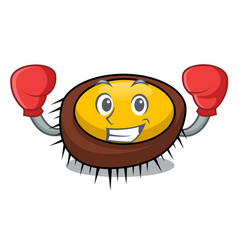 boxing sea urchin character cartoon vector image