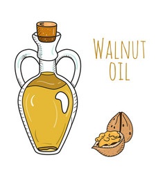 colorful hand drawn walnut oil bottle vector image