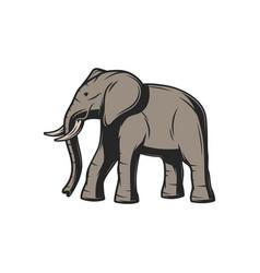 elephant african safari hunt and wild zoo animal vector image