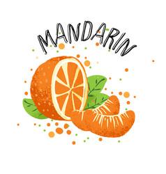 Hand draw orange mandarin vector