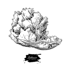 Lettuce hand drawn Vegetable engraved vector image