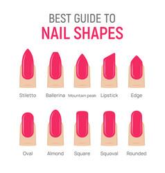 Nail shapes manicure art fingernail shape vector