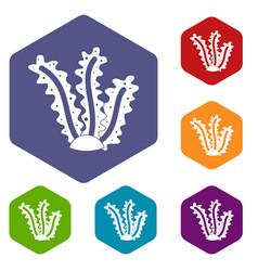 Seaweed icons set hexagon vector