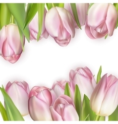 Colorful tulip blooms card EPS 10 vector image
