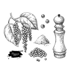 black pepper drawing set peppercorn heap vector image