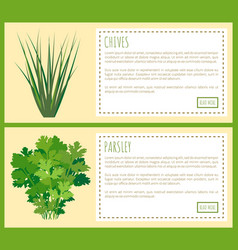 chives and parsley greenery food condiments set vector image