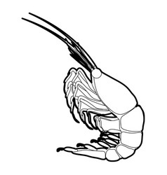 shrimp icon outline vector image