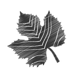 Sketch leave grape design vector