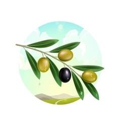 Realistic olive branch vector image vector image