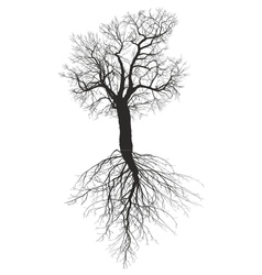Mulberry tree without leaves with root vector image