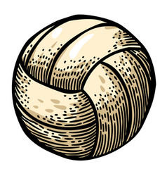 cartoon image of volleyball icon sport symbol vector image