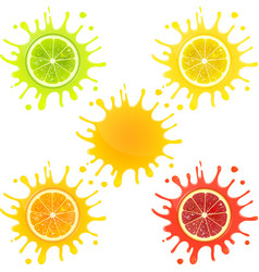 Citrus Fruit in Splashes of Juice vector