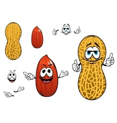 Funny kernel and pod of peanut characters vector