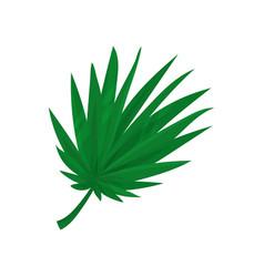 green fan palm leaf vector image