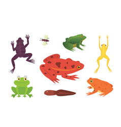 Printexotic amphibian set frogs in different vector