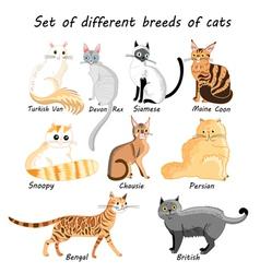 Set of cat breeds vector