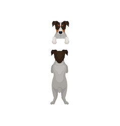 Back view of jack russell terrier standing on hind vector