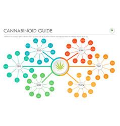 Cannabinoid guide horizontal business infographic vector