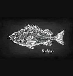 Chalk sketch rockfish vector