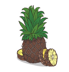 Isolate ripe ananas fruit vector