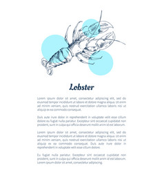 lobster seafood hand drawn vector image