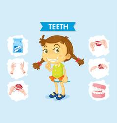 Scientific medical teeth care poster vector