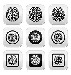 Human brain icons set - intelligence creativity c vector image vector image