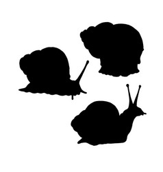 snail silhouette black white icon vector image vector image