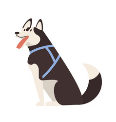 Adorable husky sitting cute adorable purebred vector