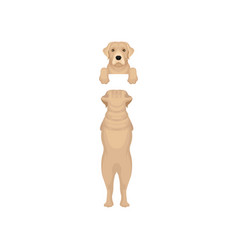 adorable labrador retriever hanging on invisible vector image