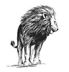 Hand sketch standing lion vector image