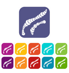 spiral bacteria icons set vector image