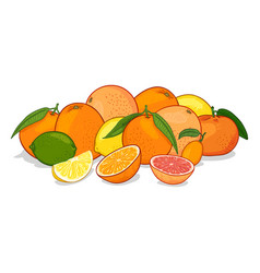 Cartoon set citrus fruits vector