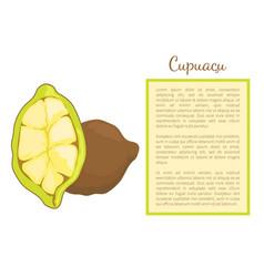 cupuacu exotic cupuassu cupuazu and copoasu poster vector image