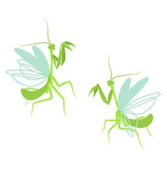 Praying mantis Flat drawing of insect on white vector