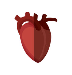 heart organ healthy design graphic vector image