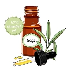 Bottle of sage essential oil with dropper vector