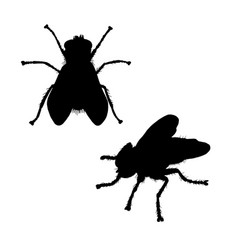 fly silhouette black white icon vector image