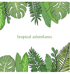 frame with leaves tropical plants colorful vector image