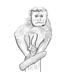 sketch of monkey vector image