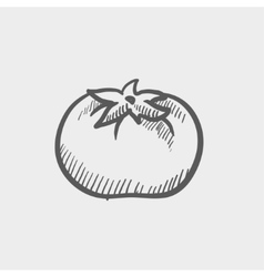 Tomato sketch icon vector image