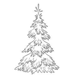 Christmas fir tree contours vector