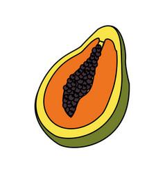 Delicious pawpaw tropic fruits vector