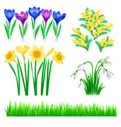 detailed spring flowers and vector image