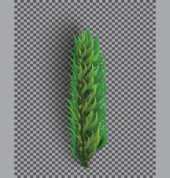fir branch christmas tree pine sprig vector image